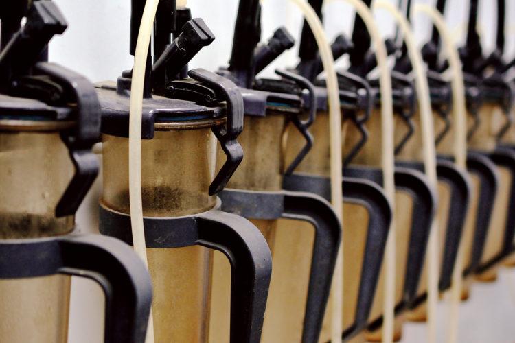 Producción de leche de las ganaderías gallegas en Control Lechero <br><small>Informe AFRICOR</small>