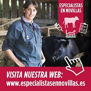 especialistasennovillas.com