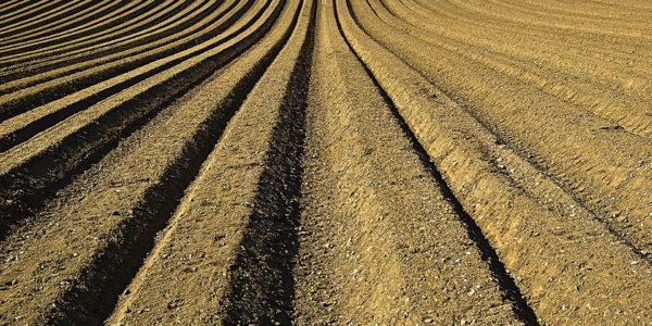 Acidez y salinidad en el suelo: detección e importancia