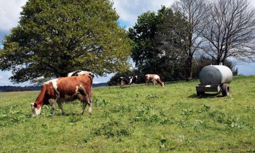 Cuestionario: ¿qué opinan los ganaderos de la reforma de la PAC?
