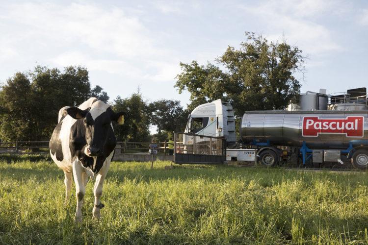 «Las vacas en una situación de bienestar son más rentables» <br><small>Joaquín Lorenzo | Responsable de Compras Agro de Calidad Pascual</small>