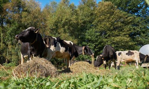 «La principal ventaja del pastoreo a día de hoy es su aceptación social» <br><small>César Resch | CIAM</small>