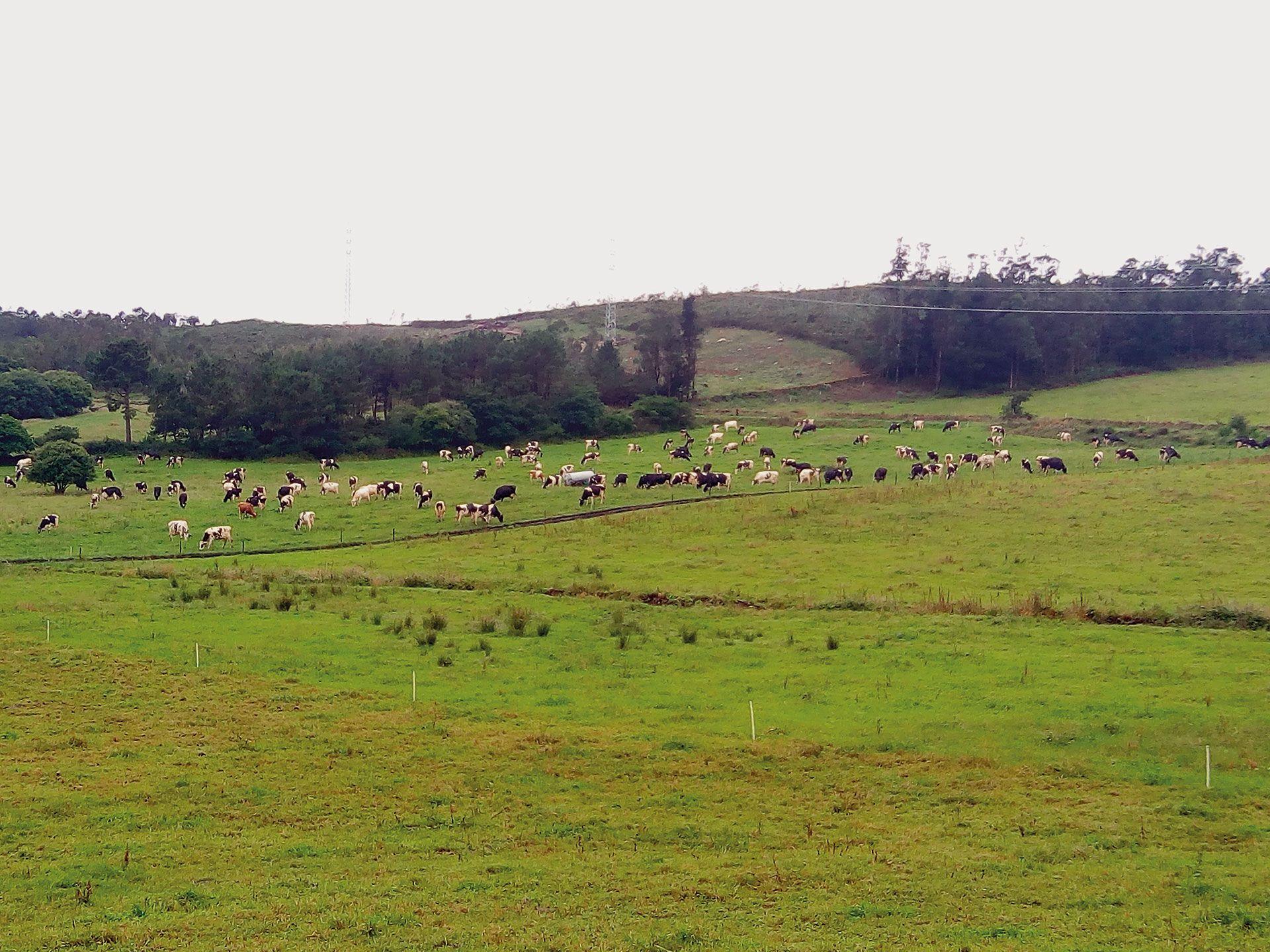 Revista AFRIGA — El pastoreo moderno | Xan Pouliquen