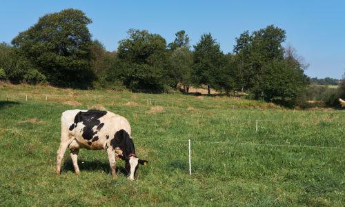 El pastoreo moderno: técnicas, condiciones necesarias y errores habituales <br><small>Xan Pouliquen Kerlau | Xestión Agrogandeira e Natureza SL</small>