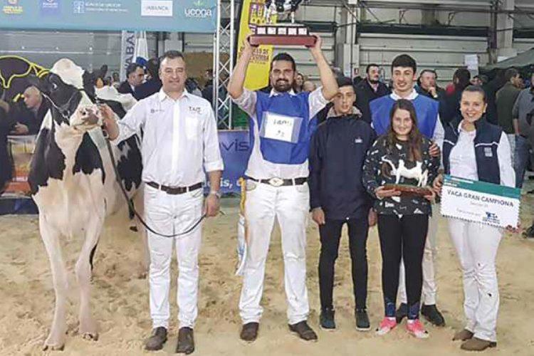 EL MANEJO<br><small>en los concursos de ganado</small>